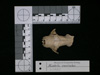 http://mczbase.mcz.harvard.edu/specimen_images/mammalogy/large/62983_Mustela_macrodon_hd2.jpg