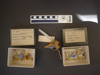 http://mczbase.mcz.harvard.edu/specimen_images/mammalogy/large/6312_Tolypeutes_matacus_hv.jpg