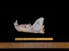 http://mczbase.mcz.harvard.edu/specimen_images/mammalogy/large/63600_Felis_concolor_ml2.jpg
