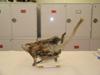 http://mczbase.mcz.harvard.edu/specimen_images/mammalogy/large/6381_Schoinobates_volans_volans_d.jpg