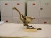 http://mczbase.mcz.harvard.edu/specimen_images/mammalogy/large/6381_Schoinobates_volans_volans_v2.jpg
