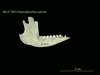 http://mczbase.mcz.harvard.edu/specimen_images/mammalogy/large/7393_Chaetophractus_nationi_ml.jpg