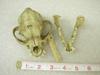 http://mczbase.mcz.harvard.edu/specimen_images/mammalogy/large/9333_Canis_familiaris_hd.jpg