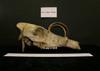 http://mczbase.mcz.harvard.edu/specimen_images/mammalogy/large/9400_Babyrousa_babyrousa_hl.jpg