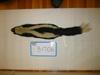 http://mczbase.mcz.harvard.edu/specimen_images/mammalogy/large/BANGS-1706_Mephitis_mephitis_nigra_d.jpg