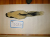 http://mczbase.mcz.harvard.edu/specimen_images/mammalogy/large/BANGS-2370_Mephitis_mephitis_nigra_d.jpg