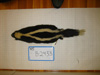 http://mczbase.mcz.harvard.edu/specimen_images/mammalogy/large/BANGS-2433_Mephitis_mephitis_nigra_d.jpg