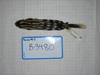 http://mczbase.mcz.harvard.edu/specimen_images/mammalogy/large/BANGS-3480_Spilogale_putorius_ambarvalis_d.jpg