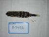 http://mczbase.mcz.harvard.edu/specimen_images/mammalogy/large/BANGS-3486_Spilogale_putorius_ambarvalis_d.jpg
