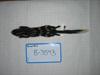 http://mczbase.mcz.harvard.edu/specimen_images/mammalogy/large/BANGS-3543_Spilogale_putorius_putorius_d.jpg