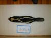 http://mczbase.mcz.harvard.edu/specimen_images/mammalogy/large/BANGS-3803_Mephitis_mephitis_mephitis_d.jpg