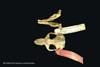 http://mczbase.mcz.harvard.edu/specimen_images/mammalogy/large/BANGS-5016_Geomys_pinetis_pinetis_hd.jpg