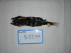 http://mczbase.mcz.harvard.edu/specimen_images/mammalogy/large/BANGS-5544_Spilogale_putoris_latifrons_d.jpg