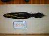 http://mczbase.mcz.harvard.edu/specimen_images/mammalogy/large/BANGS-5796_Mephitis_mephitis_mephitis_d.jpg