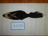 http://mczbase.mcz.harvard.edu/specimen_images/mammalogy/large/BANGS-6044_Mephitis_mephitis_elongata_d.jpg