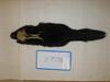 http://mczbase.mcz.harvard.edu/specimen_images/mammalogy/large/BANGS-7738_Mephitis_macroura_avia_d.jpg