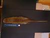 http://mczbase.mcz.harvard.edu/specimen_images/mammalogy/large/BANGS-8114_Caluromys_lanatus_cicur_d.jpg