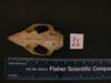 http://mczbase.mcz.harvard.edu/specimen_images/mammalogy/large/BANGS-8114_Caluromys_lanatus_cicur_hd.jpg