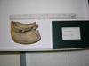 http://mczbase.mcz.harvard.edu/specimen_images/mammalogy/large/BOM-1140_Physeter_catodon_dent_l.jpg