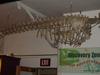 http://mczbase.mcz.harvard.edu/specimen_images/mammalogy/large/BOM-1206_Monodon_monoceras_l2.jpg