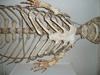 http://mczbase.mcz.harvard.edu/specimen_images/mammalogy/large/BOM-1206_Monodon_monoceras_v.jpg