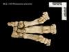 http://mczbase.mcz.harvard.edu/specimen_images/mammalogy/large/BOM-1730_Rhinoceros_unicornis_manus_v.jpg
