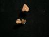 http://mczbase.mcz.harvard.edu/specimen_images/mammalogy/large/BOM-463_Felis_cattus_fem_d.jpg