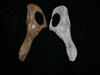 http://mczbase.mcz.harvard.edu/specimen_images/mammalogy/large/BOM-463_Felis_cattus_pelvis_d.jpg