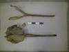 http://mczbase.mcz.harvard.edu/specimen_images/mammalogy/large/BOM-5091_Platanista_gangetica_hd.jpg