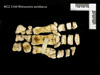 http://mczbase.mcz.harvard.edu/specimen_images/mammalogy/large/BOM-5169_Rhinoceros_sondaicus_manus_v.jpg