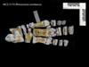 http://mczbase.mcz.harvard.edu/specimen_images/mammalogy/large/BOM-5170_Rhinoceros_sondaicus_pes_v.jpg