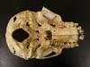 http://mczbase.mcz.harvard.edu/specimen_images/mammalogy/large/BOM-5290_Pongo_pygmaeus_hv.jpg