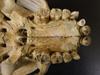 http://mczbase.mcz.harvard.edu/specimen_images/mammalogy/large/BOM-5290_Pongo_pygmaeus_hv2.jpg