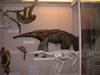 http://mczbase.mcz.harvard.edu/specimen_images/mammalogy/large/BOM-6012_Myrmecophaga_tridactyla_tridactyla_l.jpg