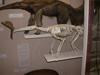 http://mczbase.mcz.harvard.edu/specimen_images/mammalogy/large/BOM-6012_Myrmecophaga_tridactyla_tridactyla_l3.jpg