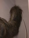 http://mczbase.mcz.harvard.edu/specimen_images/mammalogy/large/BOM-6012_Myrmecophaga_tridactyla_tridactyla_p.jpg