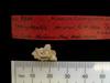 http://mczbase.mcz.harvard.edu/specimen_images/mammalogy/large/BOM-9600_Nesophontes_micrus_hl.jpg