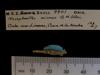 http://mczbase.mcz.harvard.edu/specimen_images/mammalogy/large/BOM-9901_Nesophontes_micrus_md.jpg