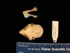 http://mczbase.mcz.harvard.edu/specimen_images/mammalogy/large/mcz16077_galago_senegalensis_skull_dors.jpg