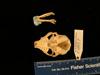 http://mczbase.mcz.harvard.edu/specimen_images/mammalogy/large/mcz16077_galago_senegalensis_skull_vent.jpg