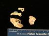 http://mczbase.mcz.harvard.edu/specimen_images/mammalogy/large/mcz16079_galago_demidovii_skull_lat.jpg