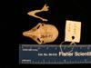 http://mczbase.mcz.harvard.edu/specimen_images/mammalogy/large/mcz26451_galago_demidovii_skull_dors.jpg