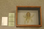 http://mczbase.mcz.harvard.edu/specimen_images/specialcollections/large/SC439_D_urceolata.jpg